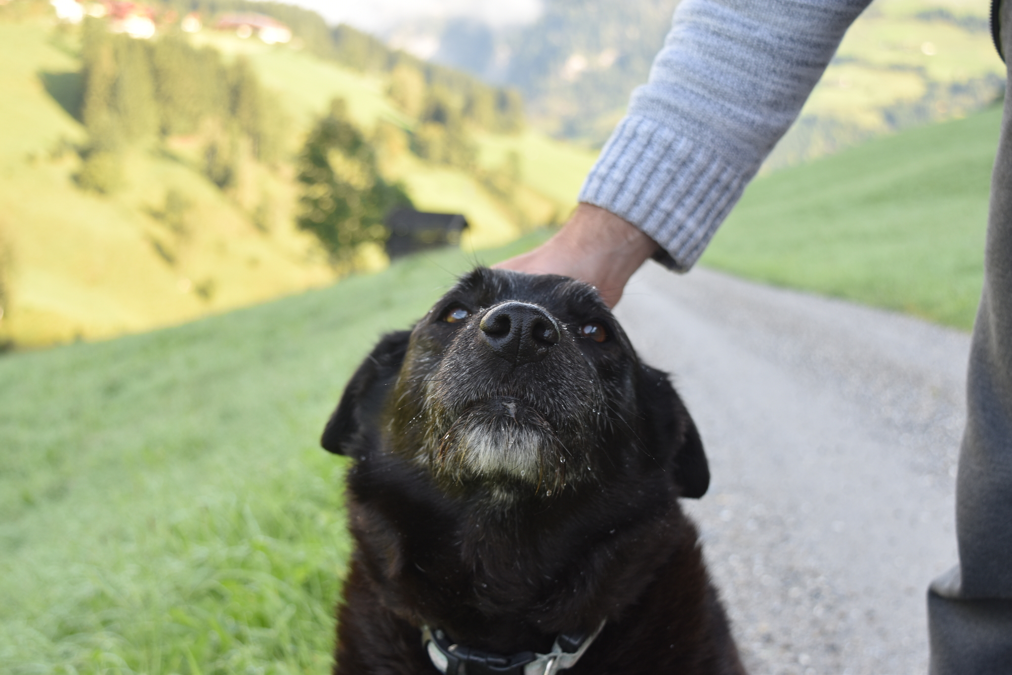 meet Ördög, our furry co-worker and companion #austrianvibes #personal #dog